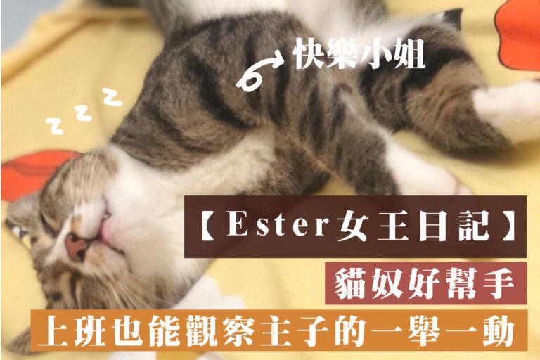 【Esther的女王日記】貓奴好幫手,上班也能觀察主子的一舉一動!小米攝影機-看家助手!
